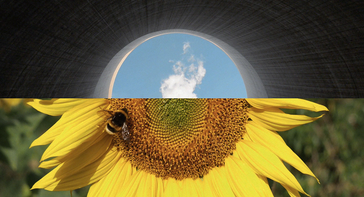 Sunflower and cooling stack